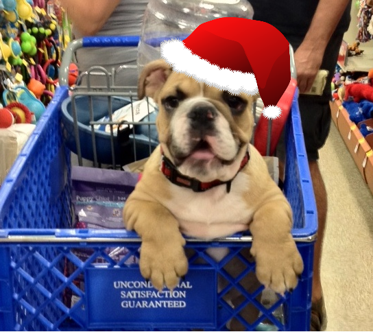 Holiday Shopping with Tank