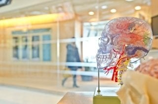 brain (1-24-17)-373759-edited.jpg